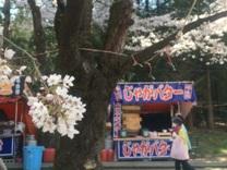 千本桜12.jpg