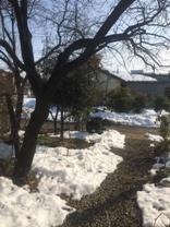 大雪2月14日からの00.jpg