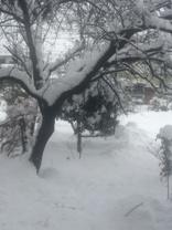 大雪2月14日からの01.JPG