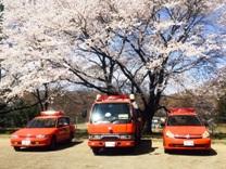 桜08.jpg