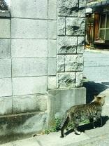 桜猫.jpg