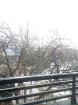 雪2月4日.jpg