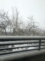 雪2月8日00.jpg